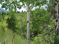 forrested area near Inkom, Idaho