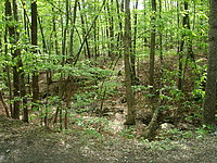 Cravin's Cove forest
